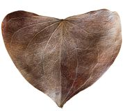 Сухое сформированное сердце лист Стоковое Изображение