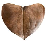 Сухое сформированное сердце лист Стоковые Изображения RF