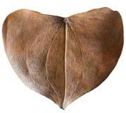Сухое сформированное сердце лист Стоковые Фотографии RF