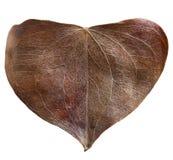 Сухое сформированное сердце лист Стоковая Фотография