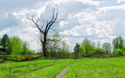Сухое чуть-чуть дерево среди зеленых цветов весны Стоковое фото RF
