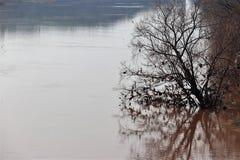Сухое standng дерева в воде Стоковая Фотография RF