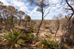 Сухой австралийский куст под голубым небом с белыми облаками стоковые изображения rf