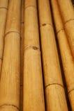 Сухой бамбук Стоковое фото RF