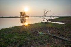 Сухой бесполезный на траве с солнечным светом утра в сельском Таиланде Стоковые Фотографии RF