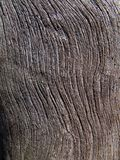 сухой вал текстуры 7 Стоковое Изображение