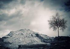 сухой вал Стоковые Фотографии RF