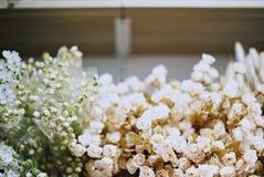 Сухой год сбора винограда цветка Стоковое Фото