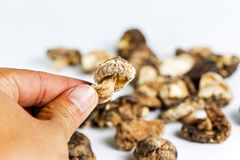 Сухой гриб шиитаке в руке Ингридиенты в еде и medici Стоковые Изображения RF