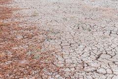 сухой завод в засушливой области Стоковые Фото