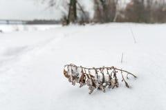 Сухой завод в снеге Стоковые Фото