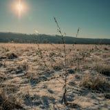 Сухой завод на зимний день Стоковое Фото