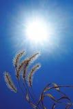 Сухой завод против на голубого неба Стоковые Фотографии RF