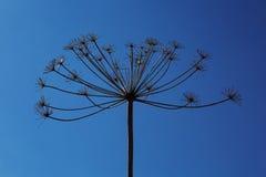 Сухой завод против неба Стоковые Изображения RF