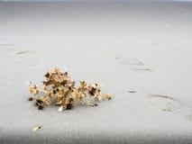 Сухой завод пляжем Стоковое Изображение