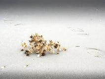 Сухой завод пляжем Стоковые Фото