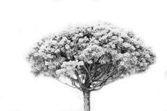 Сухой завод с белым снегом Стоковые Изображения RF