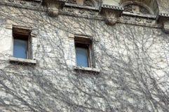 Сухой завод creeper на стене Стоковая Фотография RF