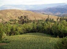 сухой зеленый горизонтальный ландшафт Стоковые Изображения