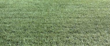 Сухой зеленой солома полей лета травы и сухой травы Стоковое Изображение