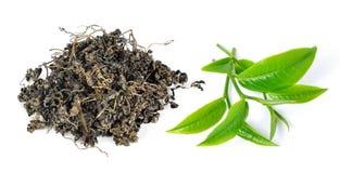 сухой зеленый ворох выходит чай Стоковая Фотография