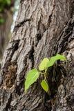 сухой зеленый цвет Стоковое Изображение RF
