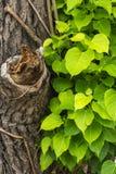сухой зеленый цвет Стоковое Фото