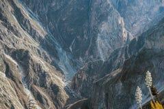 Сухой каньон горы стоковое изображение rf