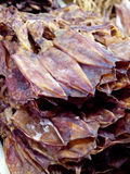 Сухой кальмар Стоковое фото RF