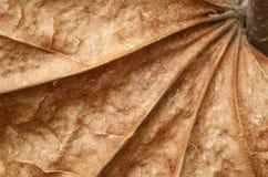 сухой клен листьев Стоковое Изображение RF