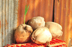 Сухой кокос стоковое изображение rf