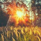 Сухой красный луг поля травы Стоковая Фотография RF