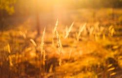 Сухой красный луг поля травы Стоковое Фото