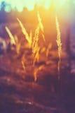 Сухой красный луг поля травы Стоковое Изображение