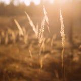 Сухой красный луг поля травы Стоковые Изображения RF