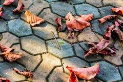 Сухой красный цвет лист на цементе Стоковая Фотография