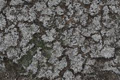 Сухой кресс Стоковая Фотография RF