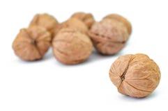 Сухой крупный план студии плодоовощ грецкого ореха Стоковые Изображения