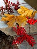 Сухой кленовый лист на доске Стоковые Фото