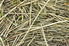 Сухой лежать тростника грязный как предпосылка стоковые изображения rf