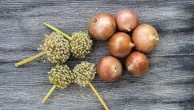 Сухой лук на деревянном поле, увеличение в сухом луке, доллар и лук, повышение цен лука, Стоковое Изображение RF