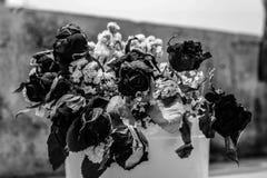 сухой мир Стоковые Фотографии RF