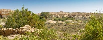 Сухой оазис в пустыне Namibe anisette Стоковые Фото