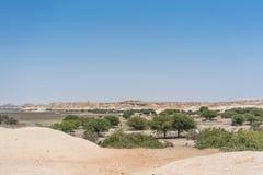 Сухой оазис в пустыне Namibe anisette Стоковое фото RF
