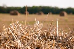 Сухой пакет сена Стоковые Изображения