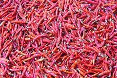 Сухой перец красного chili Стоковое Фото