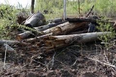 Сухой пиломатериал дерева в лесе и солнечном свете стоковое изображение rf