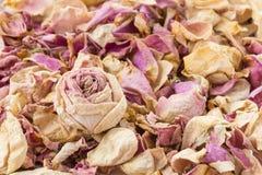 Сухой пинк и белая роза Стоковое Изображение