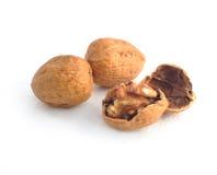 Сухой плодоовощ грецкого ореха Стоковое Изображение RF