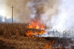 сухой пожар поля Стоковое Изображение RF